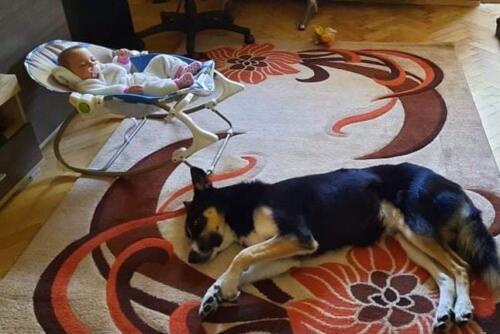 Веднага след тренировката е най-сладкия сън!И кученцето участва наравно!